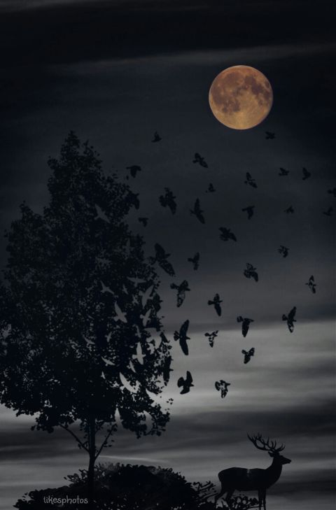 moon blackonblack tree quotes nature