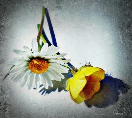 simpleflowers flower