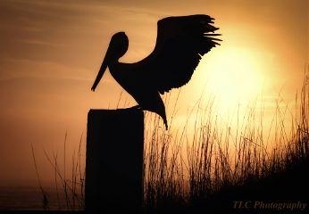 photography beach sunrise birds travel