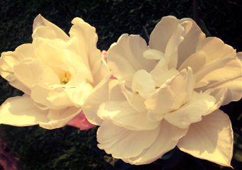 flowers beautiful spring nature