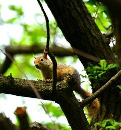 squirrel sincap wildlife petsandanimals