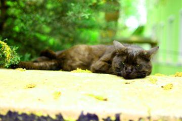 cat cats animals kedi