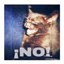 gdmeme cat cute tierna beatiful