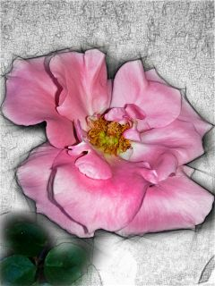 flower pencilart colorful spring