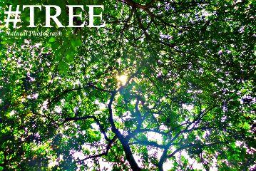 nature photography tree