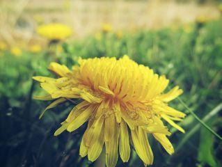flower closeup macro nature photography