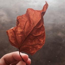 photography leaf morning bokeh