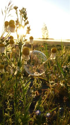 flower spring nature photography bubbles
