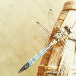 nature spring dragonfly