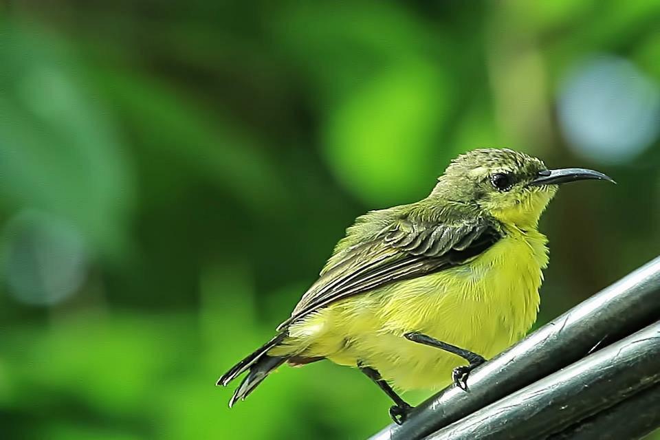 Little Bird #bird  #wildlife  #animal