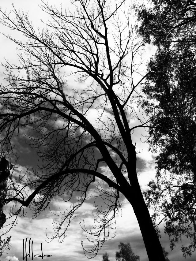 #stark  #tree #nature  #blackandwhite