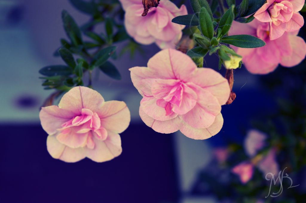 #colorful #photography #flower