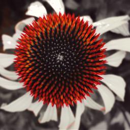 colorsplash lensblur flower