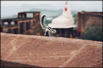 myview squiral jodhpur rajasthan india