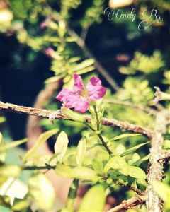 pink green photography flower cute