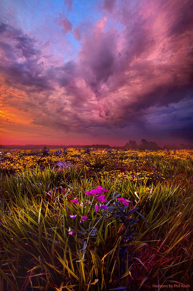 Horizons by Phil Koch  #sunrise #sunset #earthboundshots #naturephotography #Wisconsin #horizons #country #forest #path #canon #Flowers   #flower #colorful #emotions #hdr #love #nature #photography #summer #travel #hope #peace #landscapephotography #beauty #happy #weather