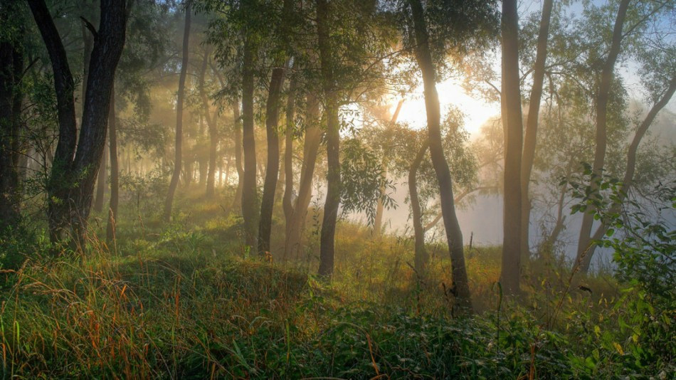 #colorful #photography #summer #light #trees #picsartedit #landscape #sunrise  #forest #morning #lake
