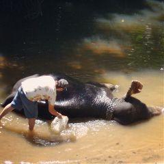 srilanka great life kandy photooftheday