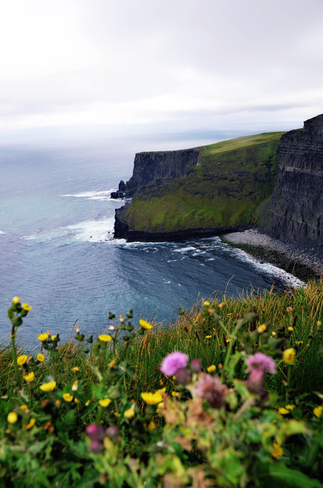 #cliffsofmoher  #water  #plants  #flowers  #cliffs  #green  #dublin #Ireland #ocean #colors #blue #gray # #yellow #pink #flowers #nature #beuty #beutiful #photography