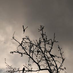 photography nature birds cloud sky