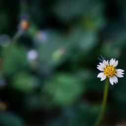 flower nature color beauty