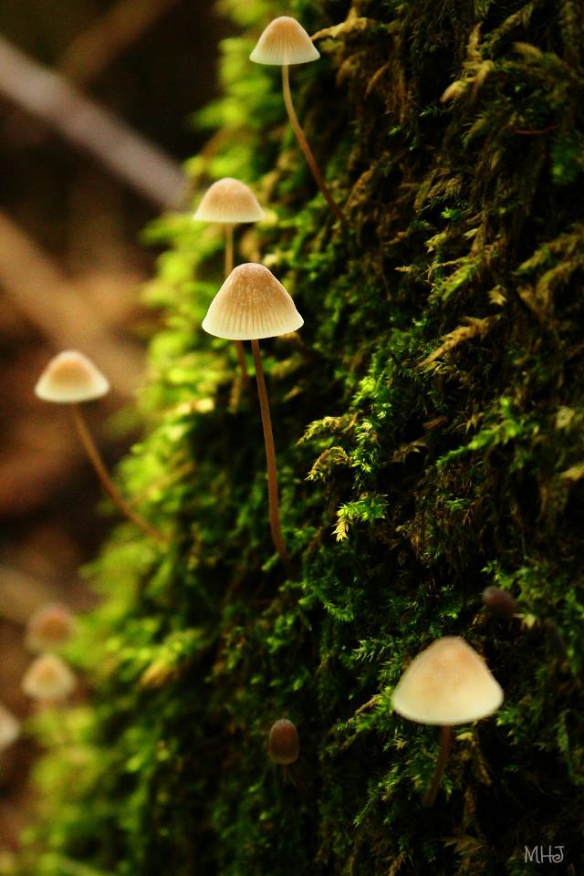 good evening 😆   EOS 700D   #photography #nature #macro #autumn #mushroom