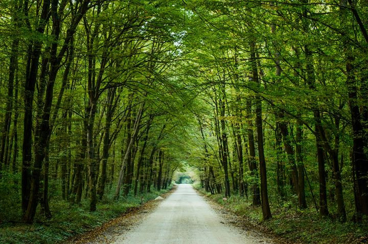 #nature  #tree  #fall #tunnel