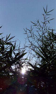 nature photography freetoedit sun